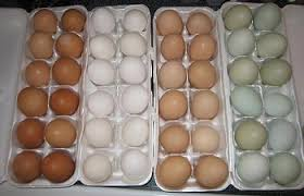Egg Color Chart Egg Color Chart Find Out What Egg Color Your Breed Lays