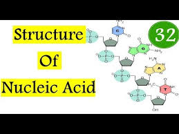 Nucleic Acid Structure Chemical Processes Mcat In Hindi Urdu