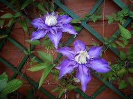 Прочитайте: Что нужно знать о шпалерах для растений ...