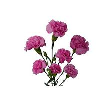 Image result for گلهای مینیاتوری