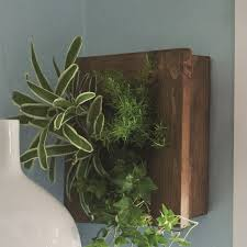 stylish wall planters you can or