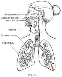 Книга Массаж при заболеваниях органов дыхания Массаж при заболеваниях органов дыхания