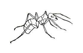 Small Picture Awesome Ant Coloring Page Black White Ideas Coloring Page Design