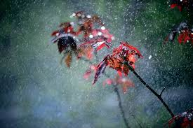 Kết quả hình ảnh cho mưa to gió lớn