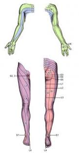 Nerve Root Dermatome Chart What Are The Dermatomes Of The Lower Extremities