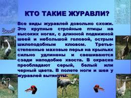 презентации на тему Птицы перелетные и зимующие редкие и  презентация наземные птицы журавль презентация наземные птицы журавль