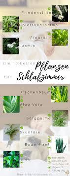 Die 10 Besten Pflanzen Fürs Schlafzimmer So Optimierst Du Deinen