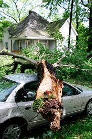 Does Homeowners Insurance Cover Dead Trees on My Property ...
