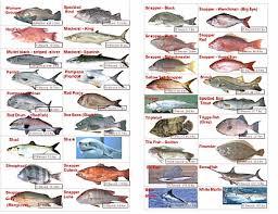 54 Studious Sea Fish Identification Chart