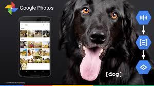 Resultado de imagem para Google Fotos usa machine learning para criar álbuns com seu pet