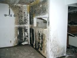 mold on concrete walls in basement concrete black mold toxic black mold black mold concrete basement