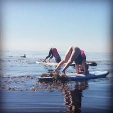 photo of ocean yoga bliss capitola ca united states a dolphin swimming