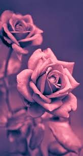 Light-Up Rose iPhone Wallpapers - Top ...