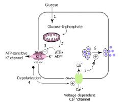 Чем лечить сухой кашель у Профилактика сахарного диабета дипломная работа