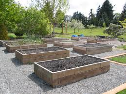 plant seedlings vegetable gardening in a raised bed to raised vegetable garden bed tips and benefits