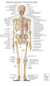 Home Anatomy Physiology For Ems Libguides At Com Library