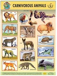 Carnivorous Animals Chart Book