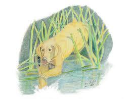 wildlife drawing old yeller by daniel shuford