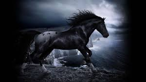 black mustang horse wallpaper.  Horse Images For U003e Cool Horse Wallpapers Inside Black Mustang Wallpaper A