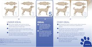 Pet Obesity Stats Facts And Risks 2019 Dogmount