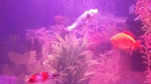 Fun Fish Tank Decorations Goldfish Fun Fish Tank Motor Youtube