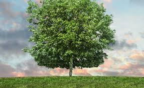 the perfect time to plant a tree