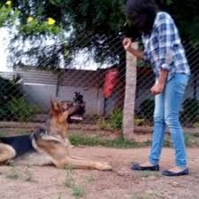 pet dogs center in hyderabad breed dogs picture