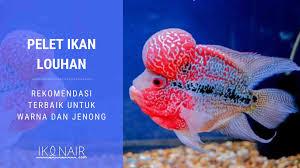 Merk Pelet Ikan Cupang Protein Tinggi