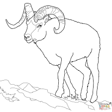 Small Picture Dall Sheep coloring page Free Printable Coloring Pages