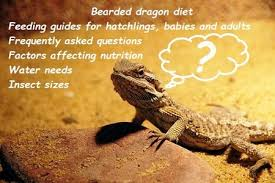 Bearded Dragon Nutrition Chart Bearded Dragon Diet 3 How To Feed Guides And Faq