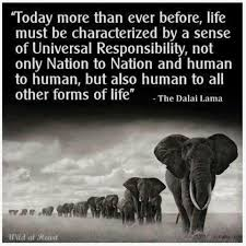 Elephant Quotes About Life From A Facebook Posthelen Fairbanks