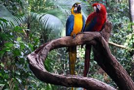 amazon rainforest plants and animals. Amazon Rainforest Plants And Animals Intended Animalia Life