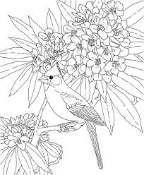 Small Picture Cardinal Bird Coloring Page Simple Cardinal Bird How To Draw A