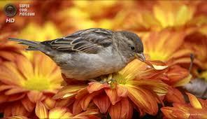 Картинки по запросу цветы осени