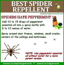 how to kill spiders in house. How To Kill Spiders In House Get Rid Of My Hacks Spider And The Spring Under I