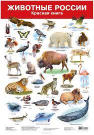 Редкие животные из красной книги Красная книга россии животные и растения название и картинки