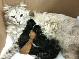 cats and kittens pictures. Fine Kittens Momma Mia 7 Important Tips When Caring For Cats And Kittens And Pictures D