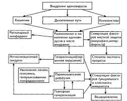 Реферат Аденовирусная инфекция ru 4 Клиническое течение аденовирусной инфекции