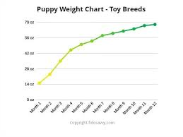 Toy Dog Growth Chart Puppy Weight Chart