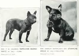 French Bulldog Feeding Guide Lovejoys