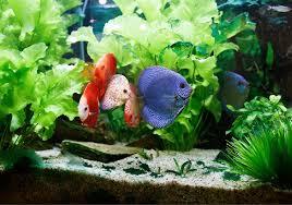 10 best planted aquarium substrate