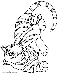 Small Picture Special Tiger Coloring Pages Best Coloring KID 629 Unknown