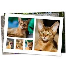 4x6 photo collage. Brilliant Photo 4x6 Collage Print Intended Photo O