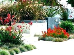 backyard design san diego. Interesting Diego Landscape Design San Diego Drought Tolerant  Backyard Ideas Garden Home Designer Pro Intended Backyard Design San Diego