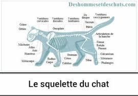information sur chat