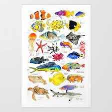 Crab Species Chart Pen And Ink Watercolored Fish Species Chart Art Print