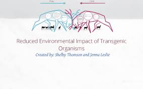 Transgenic plants have genes inserted into them, deriving from other species. Reduced Environmental Impact Of Transgenic Organisms By Shelby Thomson