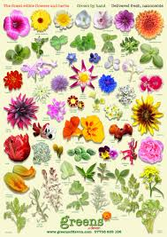 beautiful all new poster from greens of devon - edible flower ...