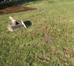 Francis Marion Fields (1855-1878) - Find A Grave Memorial