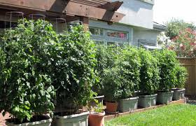 EarthTainer How To Build Your Own Container GardenContainer Garden Plans Tomatoes